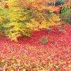 2016京都の紅葉の見頃はいつ?混雑のピークは?快適に楽しむコツ