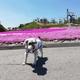 【ペットと遊ぶ】愛知県豊根村:茶臼山高原でペットと一緒に芝桜を鑑賞 | 平地より10℃近く涼しく快適に過ごせます