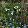 9月15日の庭