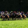 競馬はどのレースが荒れる?予想の参考になる高配当のコースまとめ