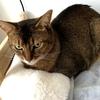 【猫さんと暮らす】夜間動物病院に行きました