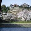 桜の犀川河畔