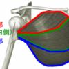【大胸筋】男らしい胸板