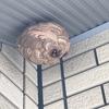 浜松市でベランダに巣を作っていたスズメバチを駆除してきました!