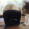 ヘルメット買ってみた