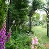 ミモザ・ガーデンの日記 麗しき五月