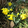 早春の「まつこの庭」(1)