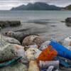 「もしドラゴンボールがあったら何を願うか」→子「海洋プラスチックごみの削減」