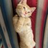 海外のフォトショ「お題:ぶりっこな子猫」