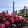 6月2日は、大好きな薔薇の日♪ ローズの日 ~横浜市の花もバラ!そしてワイン好きにもバラは大切♪