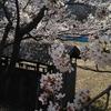 この春の写真【2】