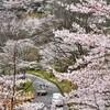 七曲の桜 2019年3月31日 福岡県京都郡みやこ町