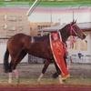 2013.03【キャロット】会報誌 AJCCで何が起こったのか・・・ ~波乱を呼んだ裁決の行方~ その後 ~調教師・騎手の見解~