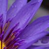 マイクロフォーサーズ中望遠マクロ「M.ZUIKO ED 60mm F2.8 Macro」で動植物撮影