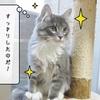 猫の道具 ~むくのシャンプー~
