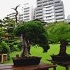 盆栽 ~Bonsai, A Small Tree that Shows Mother Nature ~