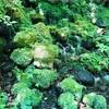 蔵王野鳥の森自然観察センターの湧き水 (宮城県苅田郡蔵王町)この地、いいところ♡