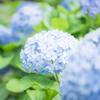 【撮影記】神戸にある日本庭園「相楽園」でフォトウォークしてきた!