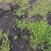 家庭菜園始動。雑草取りをしていたらアスパラが生えていた!