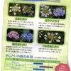 紫陽花in豊島園