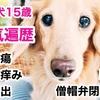 シニア犬リオ15歳が今までに経験した病気とどうやって乗り越えてきたか?
