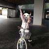 ザ・リッツ・カールトン京都 無料アクティビティ早朝サイクリングツアー体験記レポート〜子連れにもオススメ