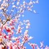 梅の花で季節を先取り