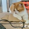 トレーニングウェアの紐が気になる愛猫。