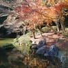 成田山新勝寺にある成田山公園の紅葉を見にいく