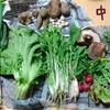 食べチョクで三重県津市からお試し野菜セットをお取り寄せしたよ【大洞菜園】