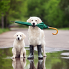 Rain - 雨