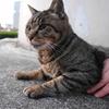 12月前半の #ねこ #cat #猫 その1
