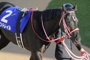 【競馬ブログ】「気まぐれウマ放談」 牝馬に続いて「無敗3冠」なるか~菊花賞