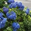 梅雨入りしました。~ 入梅は春の終わり、夏の始まり。日本では、四季(春夏秋冬)+ 梅雨 + 秋雨 = 六季なそうですが、ご存知でしたか?