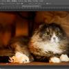 Photoshopで顔写真や文字画像にモザイクをかける方法