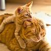 猫の種類!茶トラ、茶白、白茶の性格と柄の違いは?