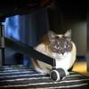 保護猫の活動で疲弊しないために