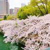 大阪・桜の通り抜けの開催日が決定!お昼に見るか、夜桜を楽しむか。どちらもおすすめ!