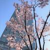 新宿の桜と書店&幸せドリンク