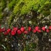 英彦山の紅葉が見ごろを迎えたそうです 福岡県添田町