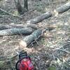 薪ストーブ始生代65 茶畑山での作業も大詰め③~最後の大物、斜面の長尺ものを玉切り&積む