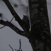 泉ヶ岳(仙台市)で、野鳥の乱舞に初遭遇! その3