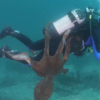 潜水夫も攻撃する大きなタコ