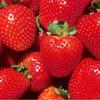 可愛いイチゴの赤い部分は果実じゃない?栄養・食べ方は?