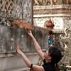 バンコクのハイテンション寺めぐりと、虫屋台の虫実食レビュー