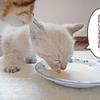 子猫の離乳食(ミルクボランティア・7)
