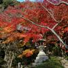 【探勝】京都の紅葉