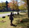 犬のアスレチック体験|昼下がりの森林公園で遊んでみた