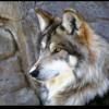 狼のララバイ――ある憑依(ひょうい)の物語  その一