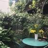 珈琲、甘味、新緑の純喫茶フェスティバル-こころみカフェ